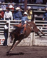 Red Lodge Rodeo Bareback Riding