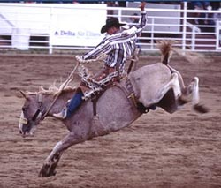 Red Lodge Rodeo Saddle Bronc